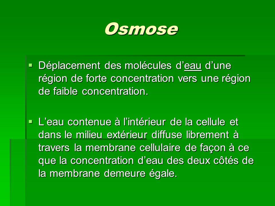 Osmose Déplacement des molécules deau dune région de forte concentration vers une région de faible concentration. Déplacement des molécules deau dune