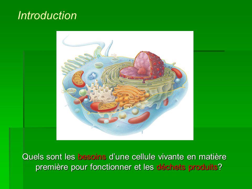 Quels sont les besoins dune cellule vivante en matière première pour fonctionner et les déchets produits? Introduction