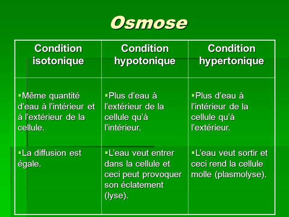 Osmose Condition isotonique Condition hypotonique Condition hypertonique Même quantité deau à lintérieur et à lextérieur de la cellule. Même quantité