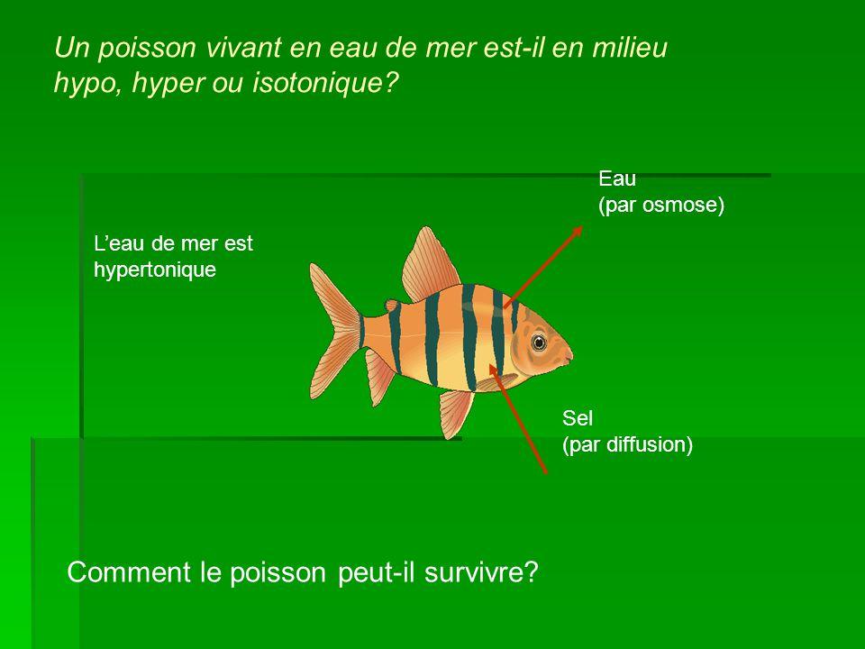 Un poisson vivant en eau de mer est-il en milieu hypo, hyper ou isotonique? Comment le poisson peut-il survivre? Eau (par osmose) Sel (par diffusion)