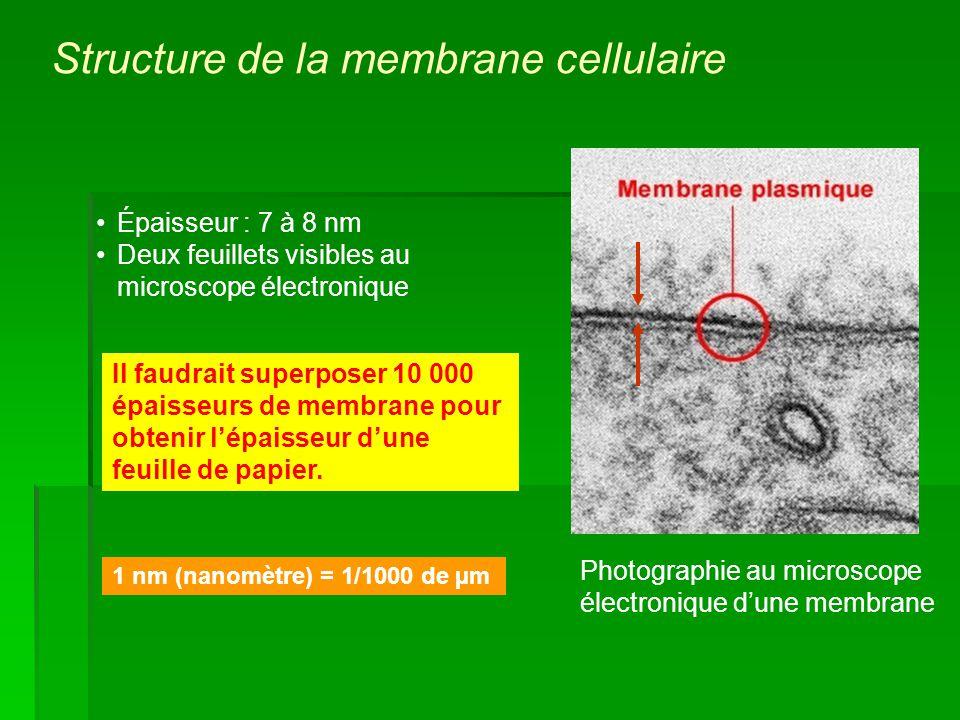 Épaisseur : 7 à 8 nm Deux feuillets visibles au microscope électronique 1 nm (nanomètre) = 1/1000 de µm Il faudrait superposer 10 000 épaisseurs de me