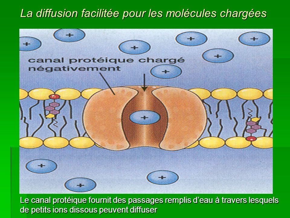 Le canal protéique fournit des passages remplis deau à travers lesquels de petits ions dissous peuvent diffuser La diffusion facilitée pour les molécu