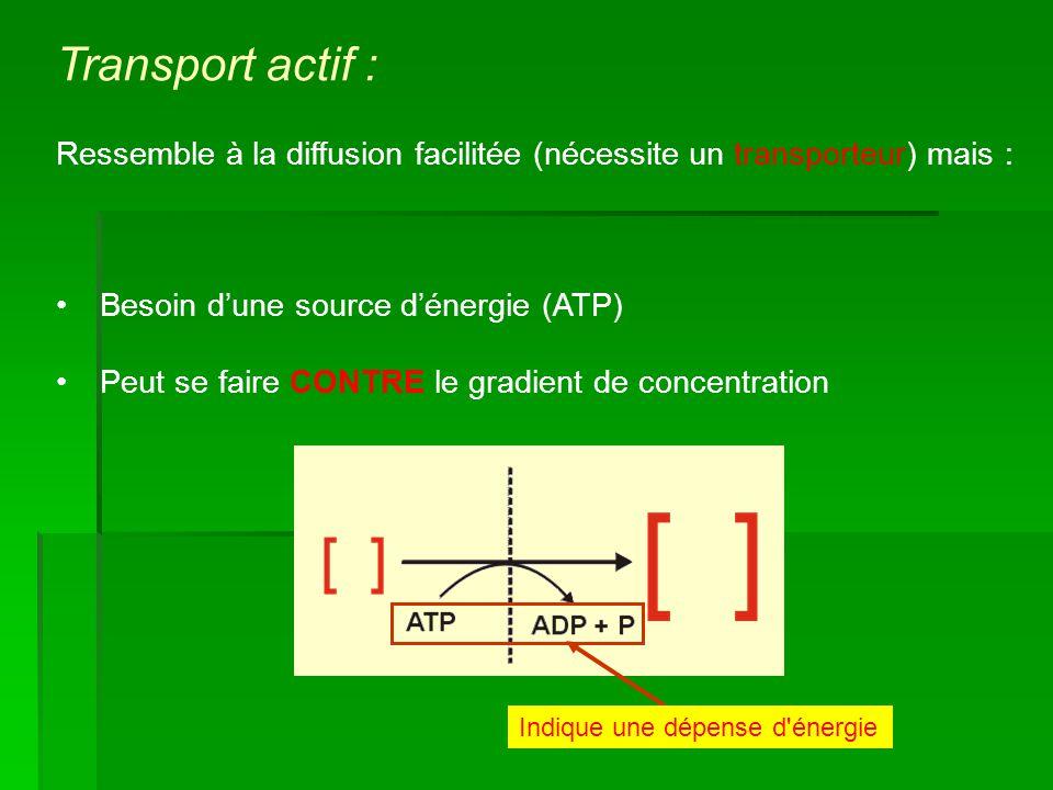 Besoin dune source dénergie (ATP) Peut se faire CONTRE le gradient de concentration Indique une dépense d'énergie Transport actif : Ressemble à la dif