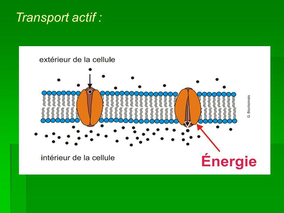 Transport actif :