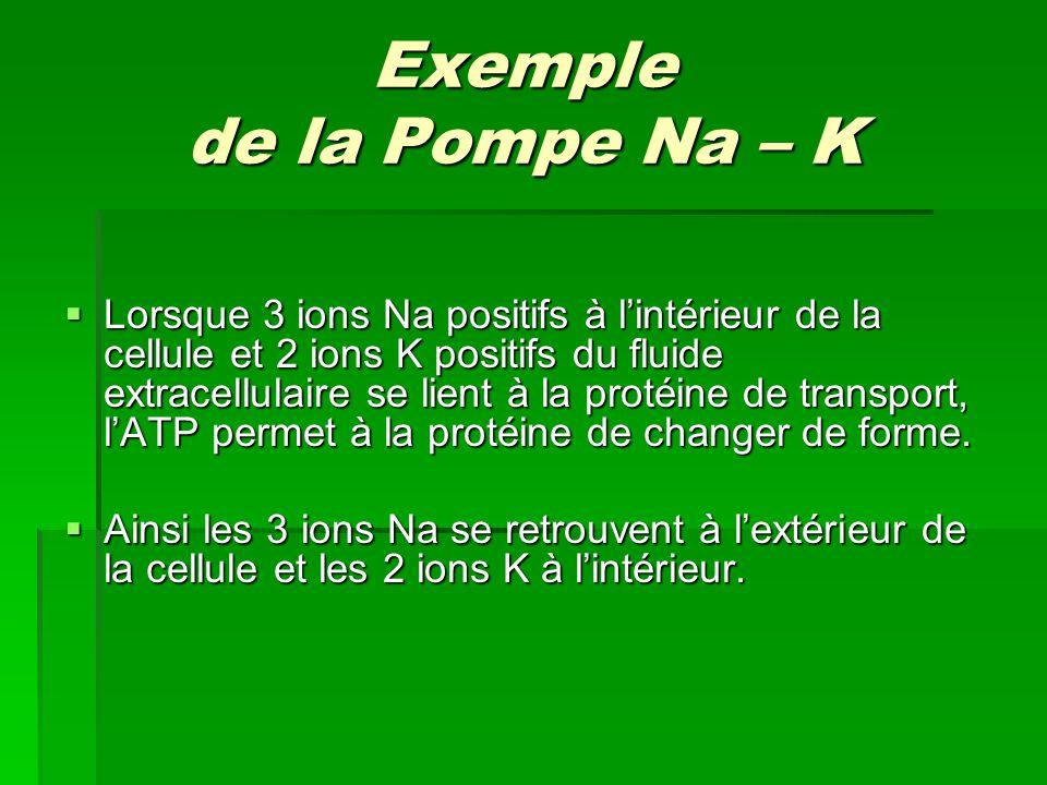 Exemple de la Pompe Na – K Lorsque 3 ions Na positifs à lintérieur de la cellule et 2 ions K positifs du fluide extracellulaire se lient à la protéine