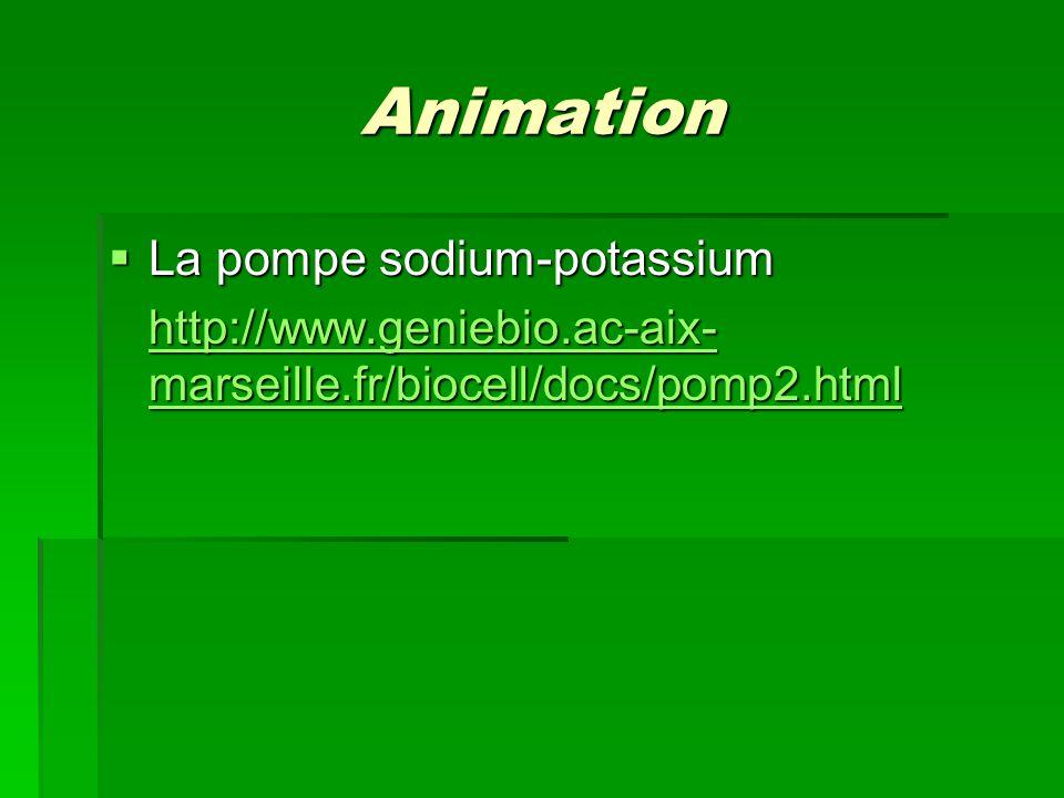 Animation La pompe sodium-potassium La pompe sodium-potassium http://www.geniebio.ac-aix- marseille.fr/biocell/docs/pomp2.html http://www.geniebio.ac-