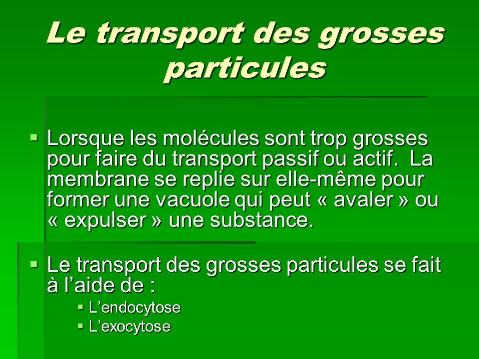 Le transport des grosses particules Lorsque les molécules sont trop grosses pour faire du transport passif ou actif. La membrane se replie sur elle-mê