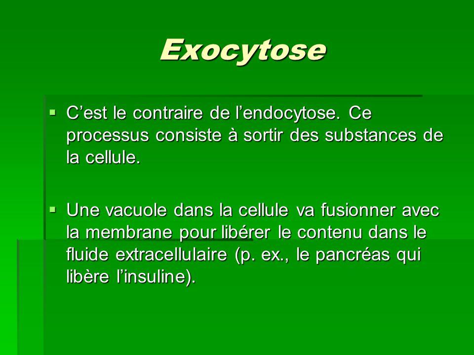Exocytose Cest le contraire de lendocytose. Ce processus consiste à sortir des substances de la cellule. Cest le contraire de lendocytose. Ce processu