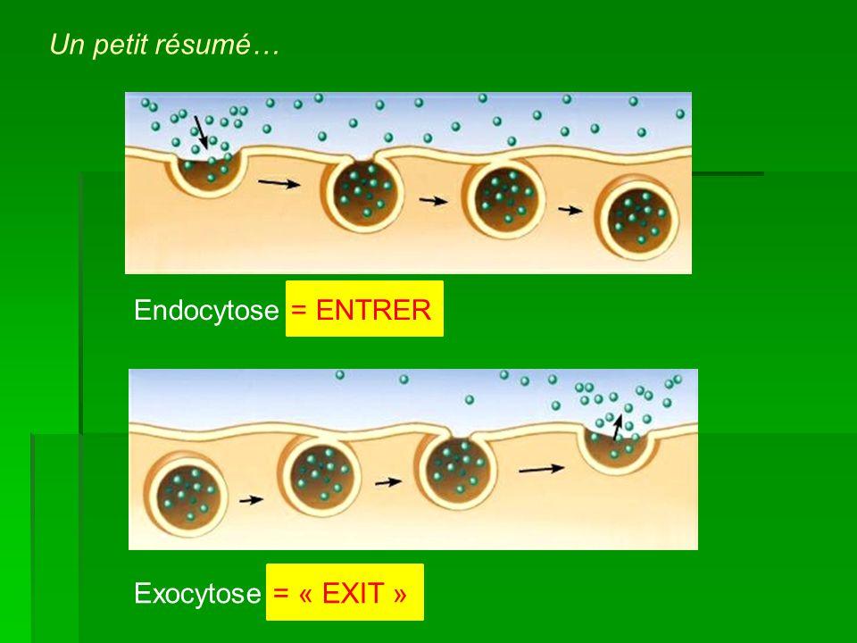 Endocytose = ENTRER Exocytose = « EXIT » Un petit résumé…