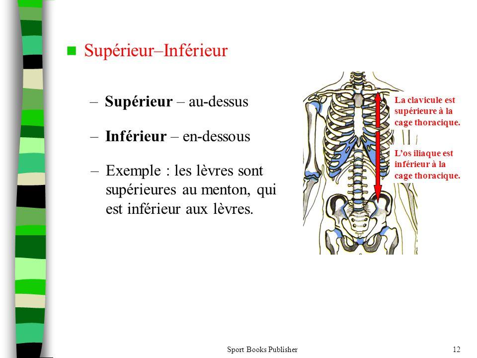 Sport Books Publisher12 Supérieur–Inférieur –Supérieur – au-dessus La clavicule est supérieure à la cage thoracique. –Inférieur – en-dessous – Exemple