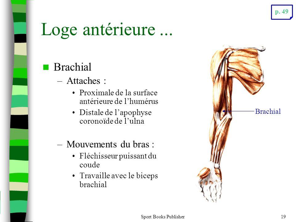 Sport Books Publisher19 Loge antérieure... Brachial –Attaches : Proximale de la surface antérieure de lhumérus Distale de lapophyse coronoïde de lulna
