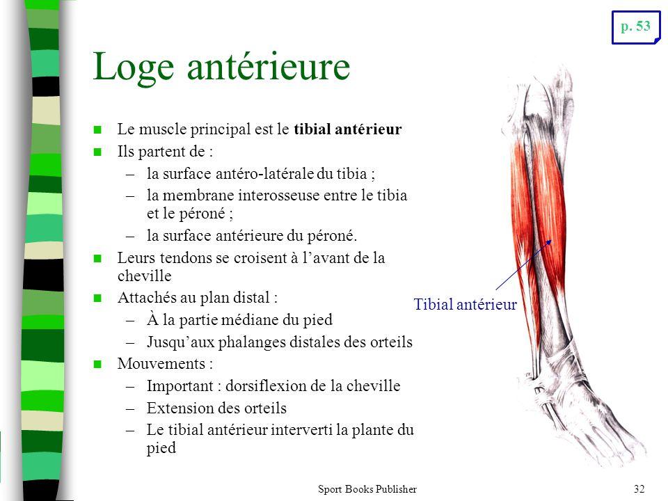 Sport Books Publisher32 Loge antérieure Le muscle principal est le tibial antérieur Ils partent de : –la surface antéro-latérale du tibia ; –la membrane interosseuse entre le tibia et le péroné ; –la surface antérieure du péroné.