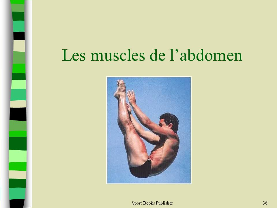 Sport Books Publisher36 Les muscles de labdomen