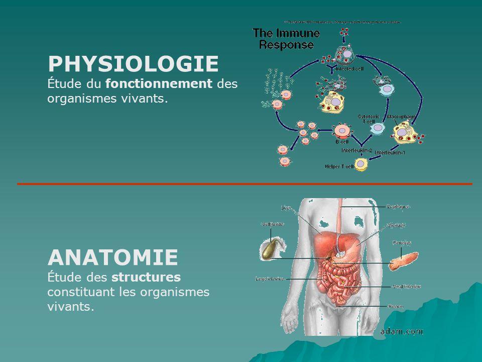 Une couche de mucus empêche la digestion de lestomac par lui- même (qui peuvent en passant désintégrer du fer!).