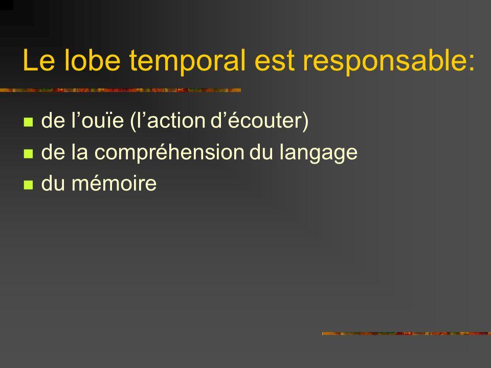 Le lobe temporal est responsable: de louïe (laction découter) de la compréhension du langage du mémoire
