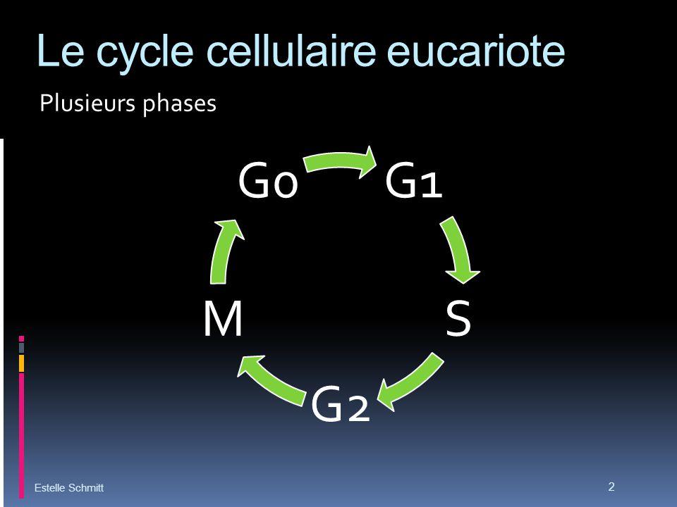 Le cycle cellulaire eucariote Plusieurs phases Estelle Schmitt 2 G1 S G2 M G0