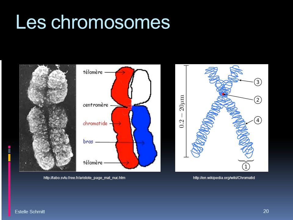Les chromosomes Estelle Schmitt 20 http://labo.svtu.free.fr/aristote_page_mat_nuc.htm http://en.wikipedia.org/wiki/Chromatid