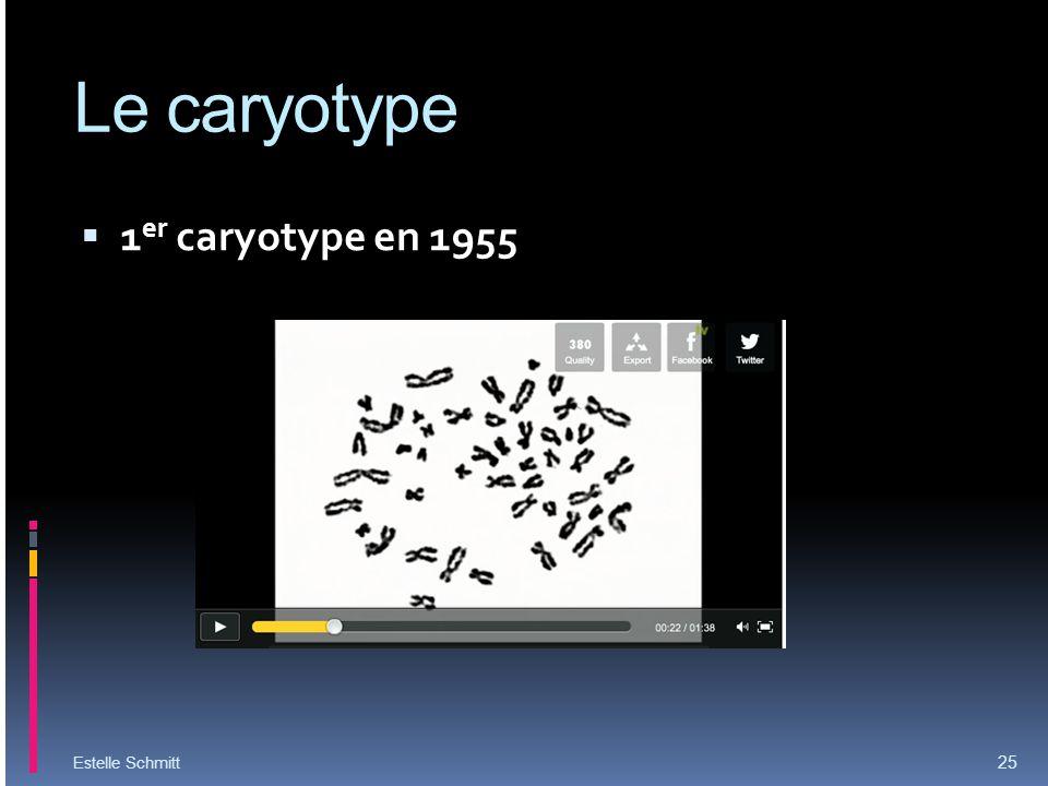 Le caryotype 1 er caryotype en 1955 Estelle Schmitt 25