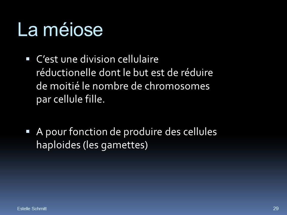 La méiose Cest une division cellulaire réductionelle dont le but est de réduire de moitié le nombre de chromosomes par cellule fille. A pour fonction