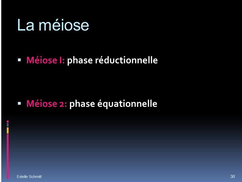 La méiose Méiose I: phase réductionnelle Méiose 2: phase équationnelle Estelle Schmitt 30