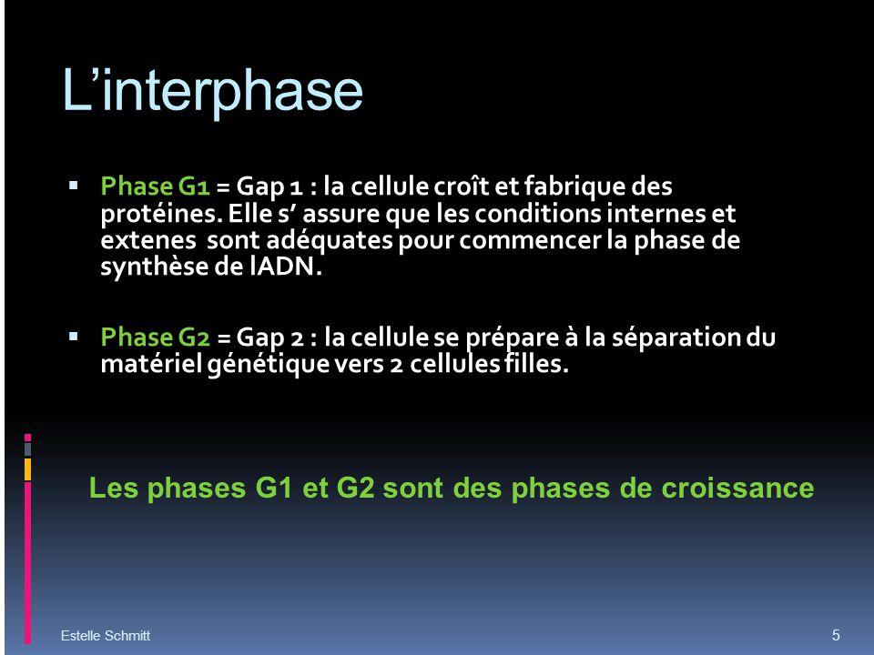 Linterphase Phase G1 = Gap 1 : la cellule croît et fabrique des protéines. Elle s assure que les conditions internes et extenes sont adéquates pour co