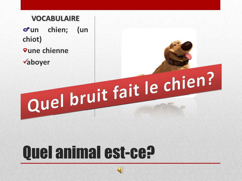 LES ANIMAUX DOMESTIQUES (pets)