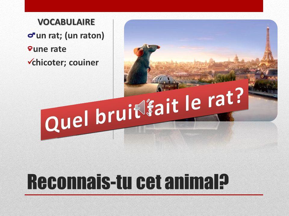 Reconnais-tu cet animal? VOCABULAIRE (un souriceau) une souris chicoter; couiner