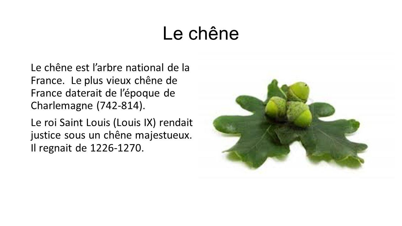 Le chêne Le chêne est larbre national de la France. Le plus vieux chêne de France daterait de lépoque de Charlemagne (742-814). Le roi Saint Louis (Lo