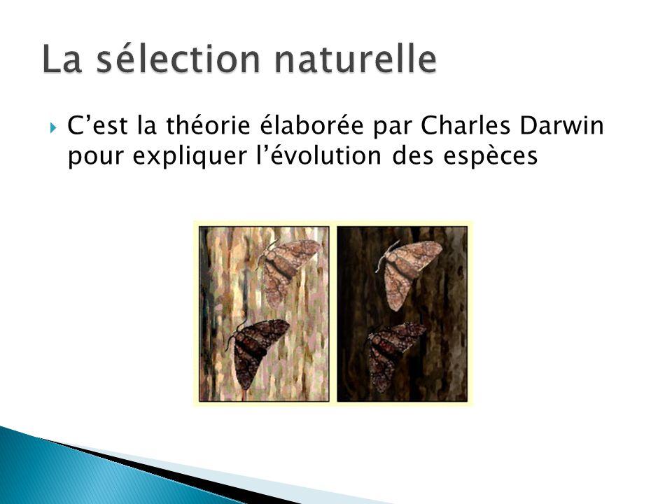 Cest la théorie élaborée par Charles Darwin pour expliquer lévolution des espèces