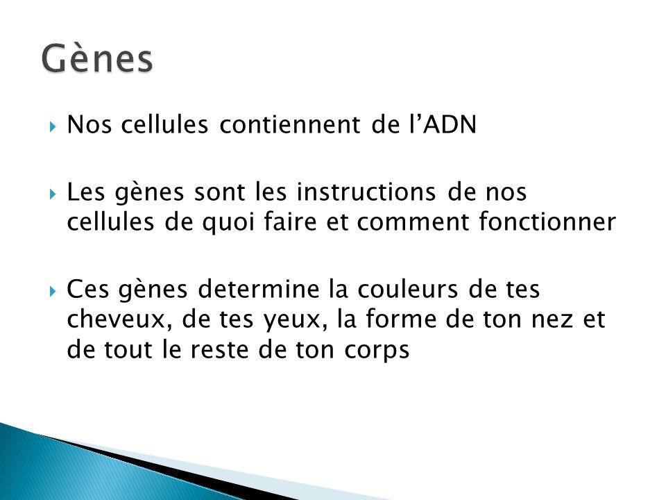 Nos cellules contiennent de lADN Les gènes sont les instructions de nos cellules de quoi faire et comment fonctionner Ces gènes determine la couleurs