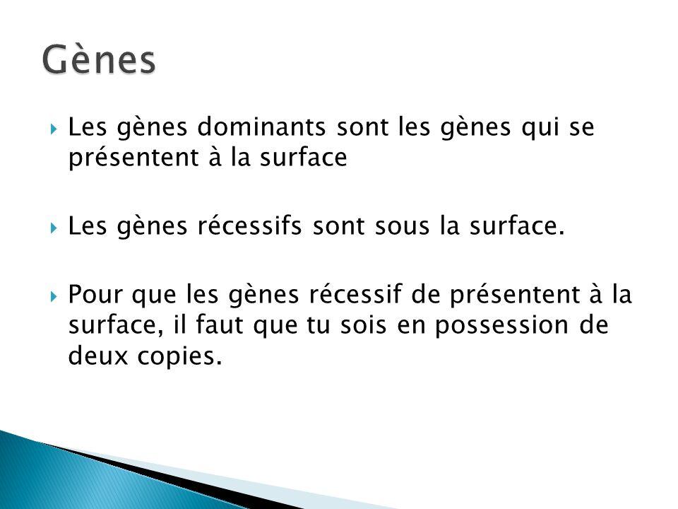 Les gènes dominants sont les gènes qui se présentent à la surface Les gènes récessifs sont sous la surface. Pour que les gènes récessif de présentent