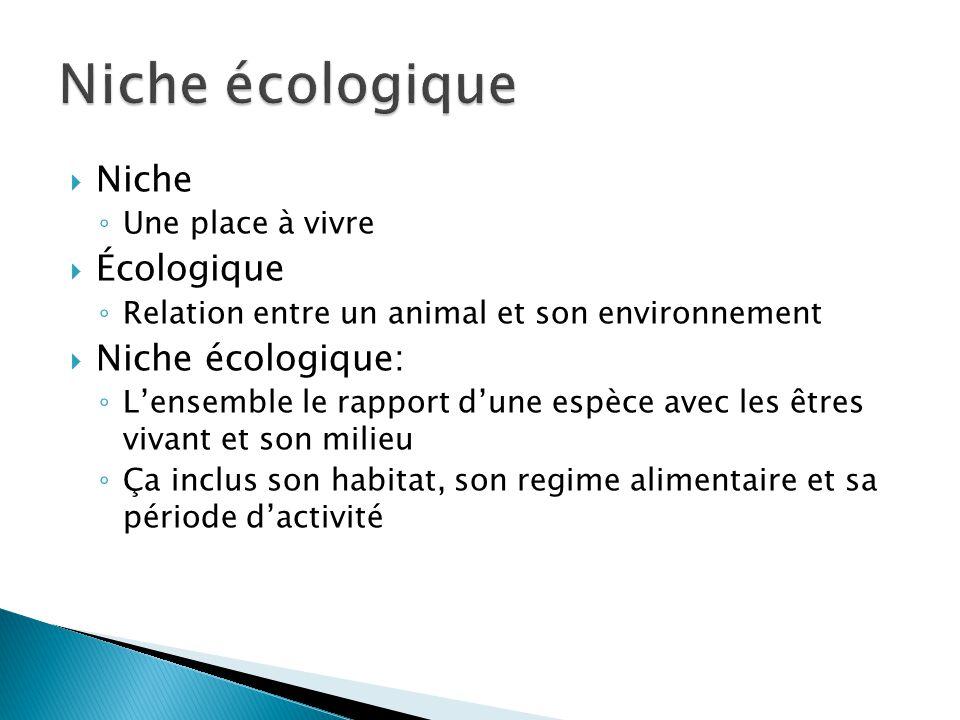 Niche Une place à vivre Écologique Relation entre un animal et son environnement Niche écologique: Lensemble le rapport dune espèce avec les êtres viv