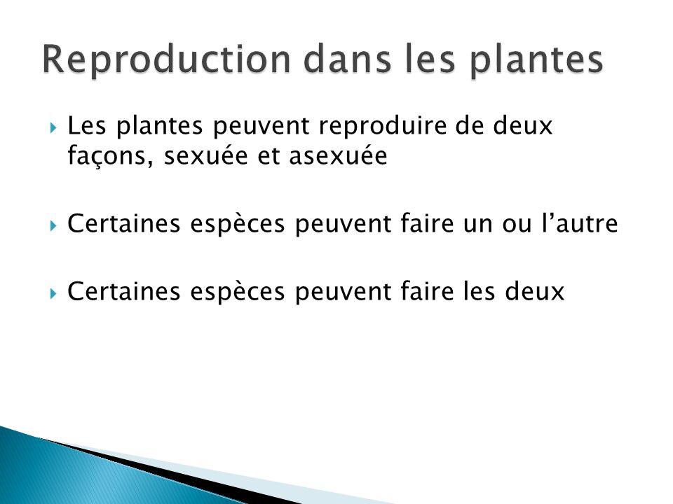 Les plantes peuvent reproduire de deux façons, sexuée et asexuée Certaines espèces peuvent faire un ou lautre Certaines espèces peuvent faire les deux