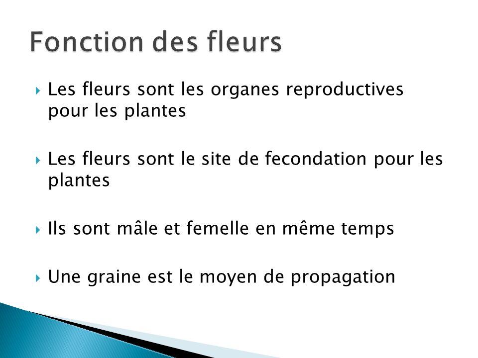 Les fleurs sont les organes reproductives pour les plantes Les fleurs sont le site de fecondation pour les plantes Ils sont mâle et femelle en même te
