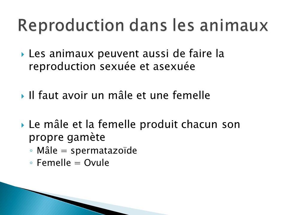 Les animaux peuvent aussi de faire la reproduction sexuée et asexuée Il faut avoir un mâle et une femelle Le mâle et la femelle produit chacun son pro
