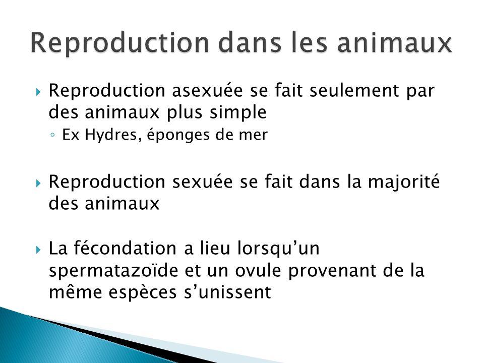 Reproduction asexuée se fait seulement par des animaux plus simple Ex Hydres, éponges de mer Reproduction sexuée se fait dans la majorité des animaux