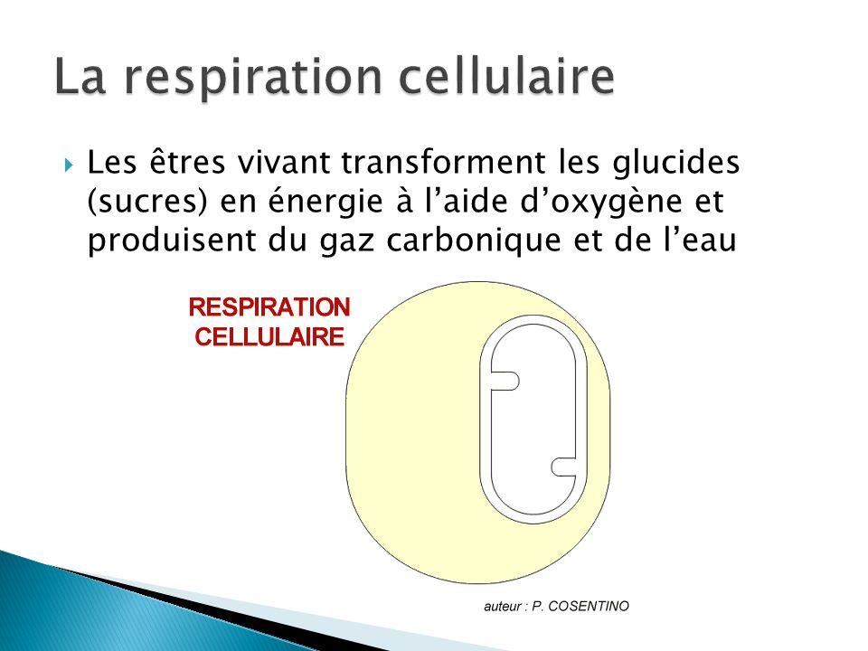 Les êtres vivant transforment les glucides (sucres) en énergie à laide doxygène et produisent du gaz carbonique et de leau