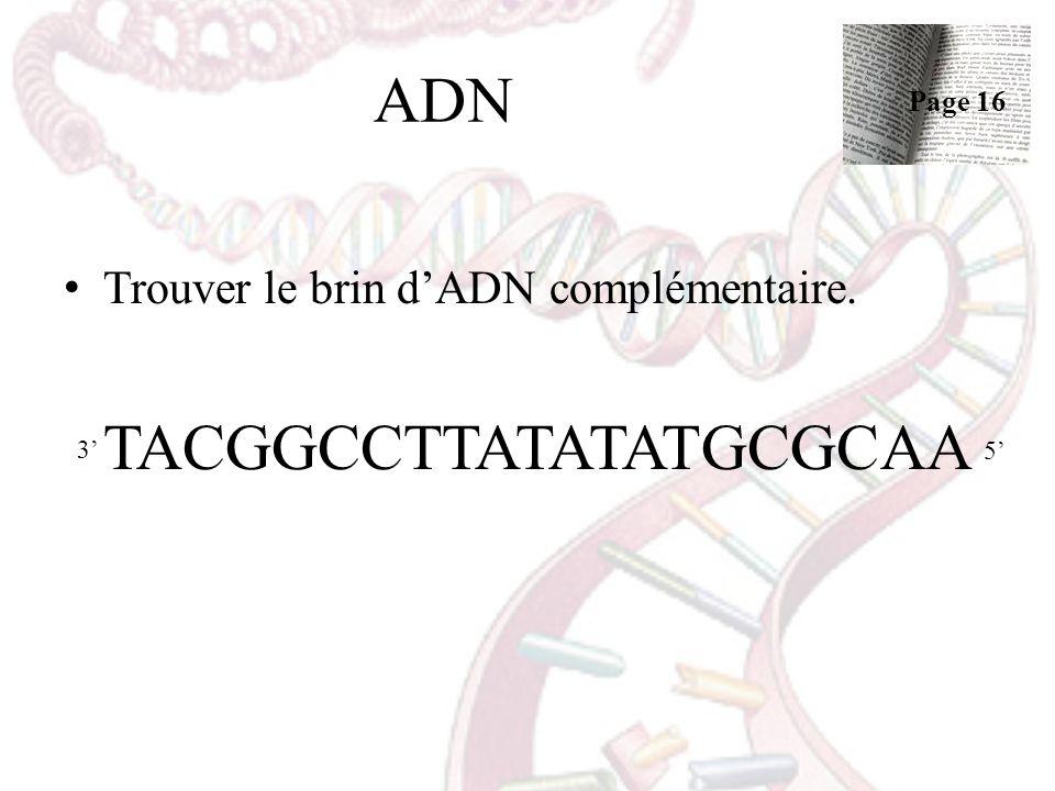 ADN Trouver le brin dADN complémentaire. TACGGCCTTATATATGCGCAA 3 5 Page 16