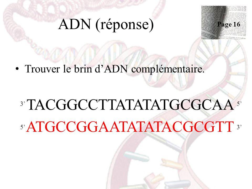 ADN (réponse) Trouver le brin dADN complémentaire. TACGGCCTTATATATGCGCAA ATGCCGGAATATATACGCGTT 53 53 Page 16
