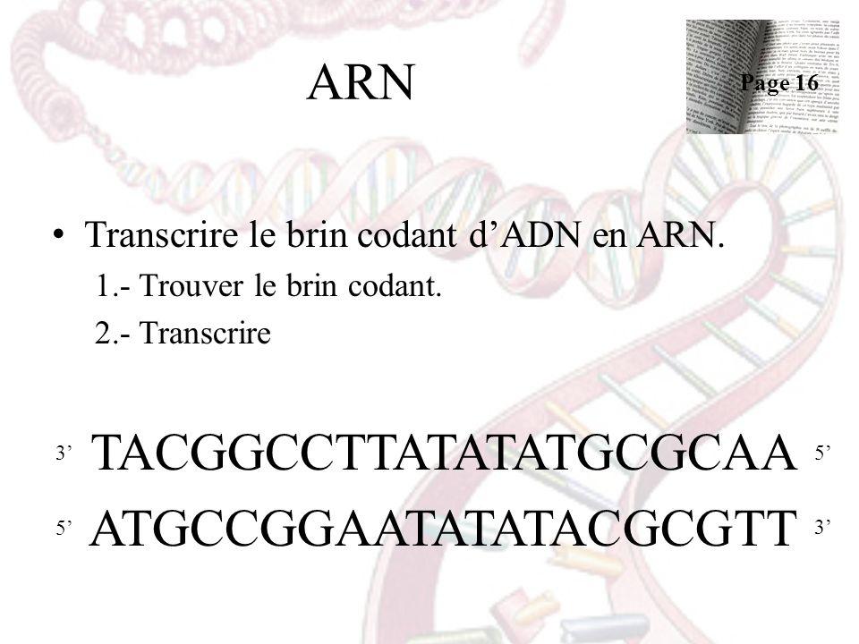 ARN Transcrire le brin codant dADN en ARN. 1.- Trouver le brin codant. 2.- Transcrire TACGGCCTTATATATGCGCAA ATGCCGGAATATATACGCGTT 35 5 3 Page 16
