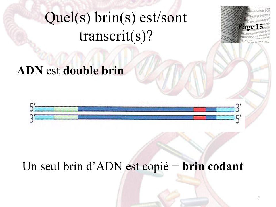 Quel(s) brin(s) est/sont transcrit(s)? ADN est double brin Un seul brin dADN est copié = brin codant 4 Page 15