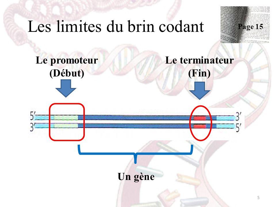 Les limites du brin codant Le promoteur (Début) Le terminateur (Fin) Un gène 5 Page 15
