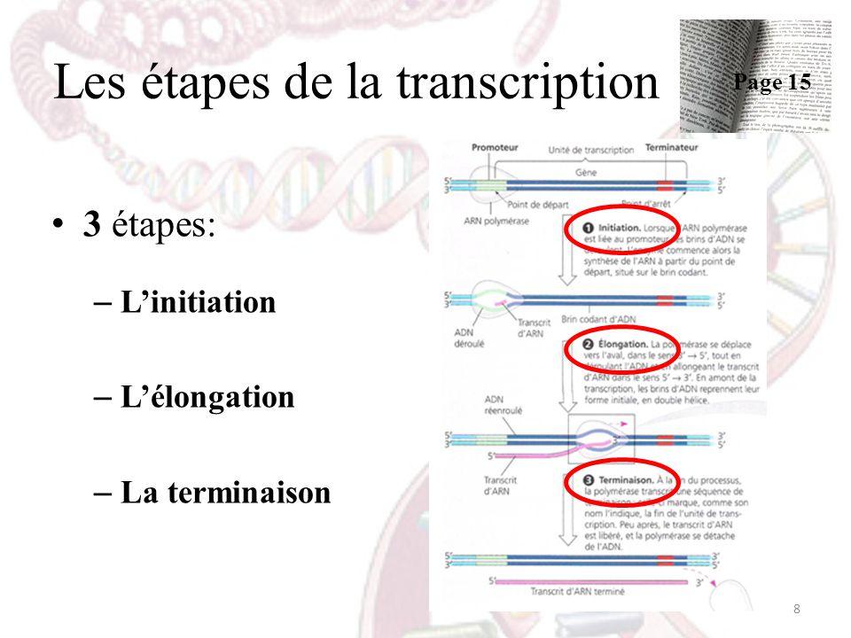 Les étapes de la transcription 3 étapes: – Linitiation – Lélongation – La terminaison 8 Page 15