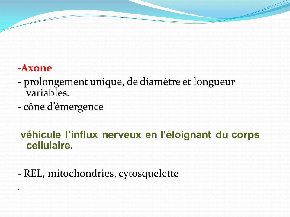 -Axone - prolongement unique, de diamètre et longueur variables. - cône démergence véhicule linflux nerveux en léloignant du corps cellulaire. - REL,