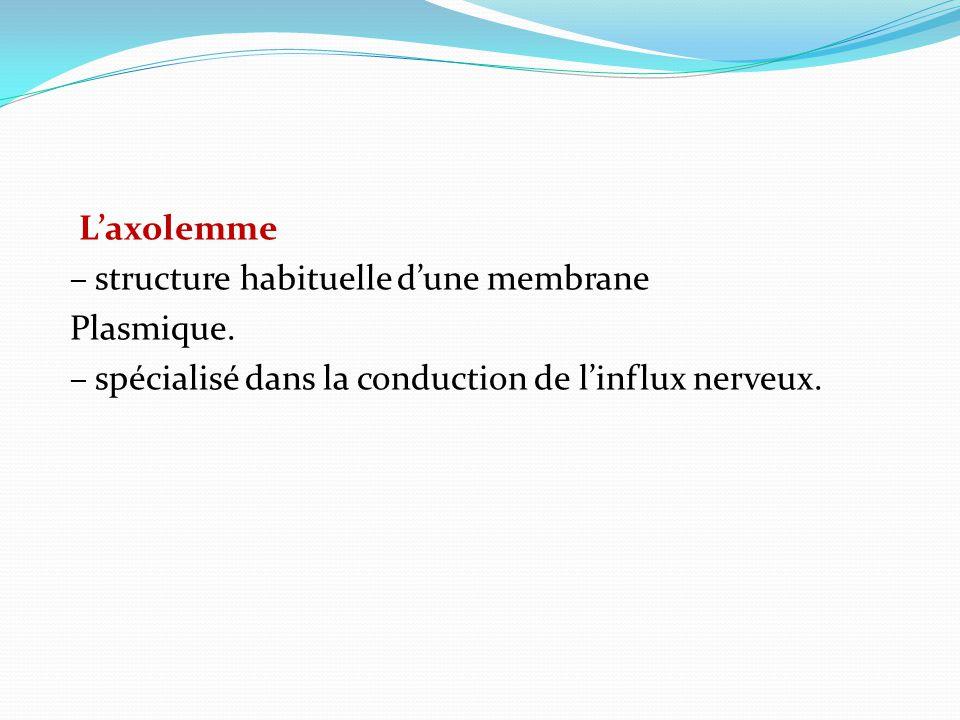 Laxolemme – structure habituelle dune membrane Plasmique. – spécialisé dans la conduction de linflux nerveux.