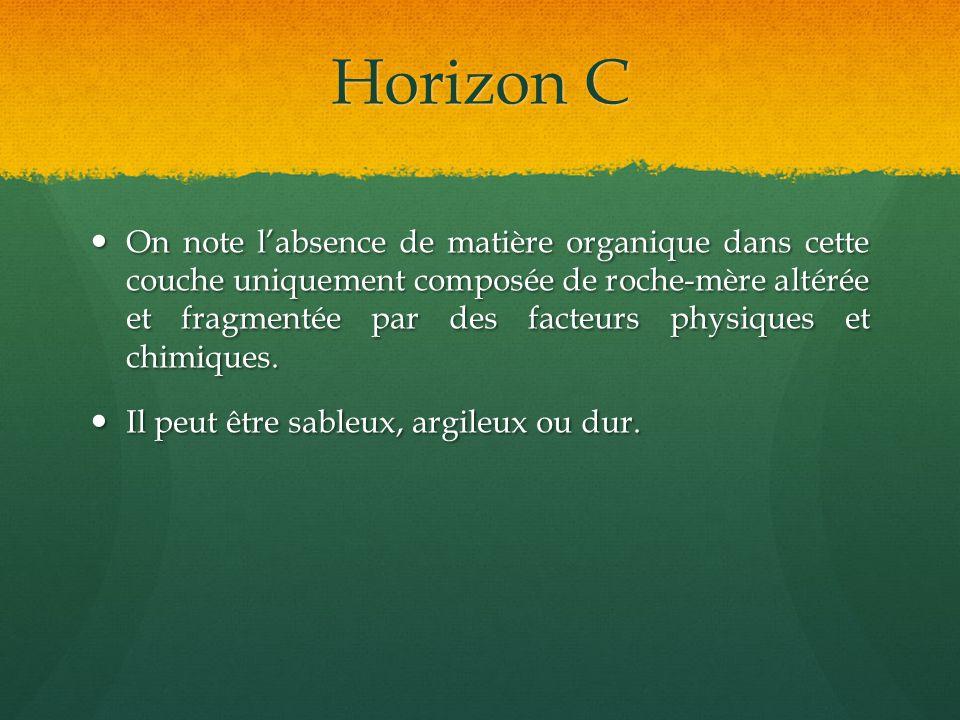 Horizon C On note labsence de matière organique dans cette couche uniquement composée de roche-mère altérée et fragmentée par des facteurs physiques e