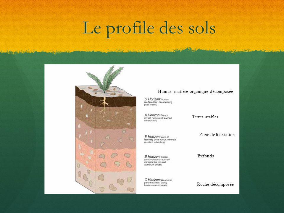 Le profile des sols Humus=matière organique décomposée Terres arables Zone de lixiviation Tréfonds Roche décomposée