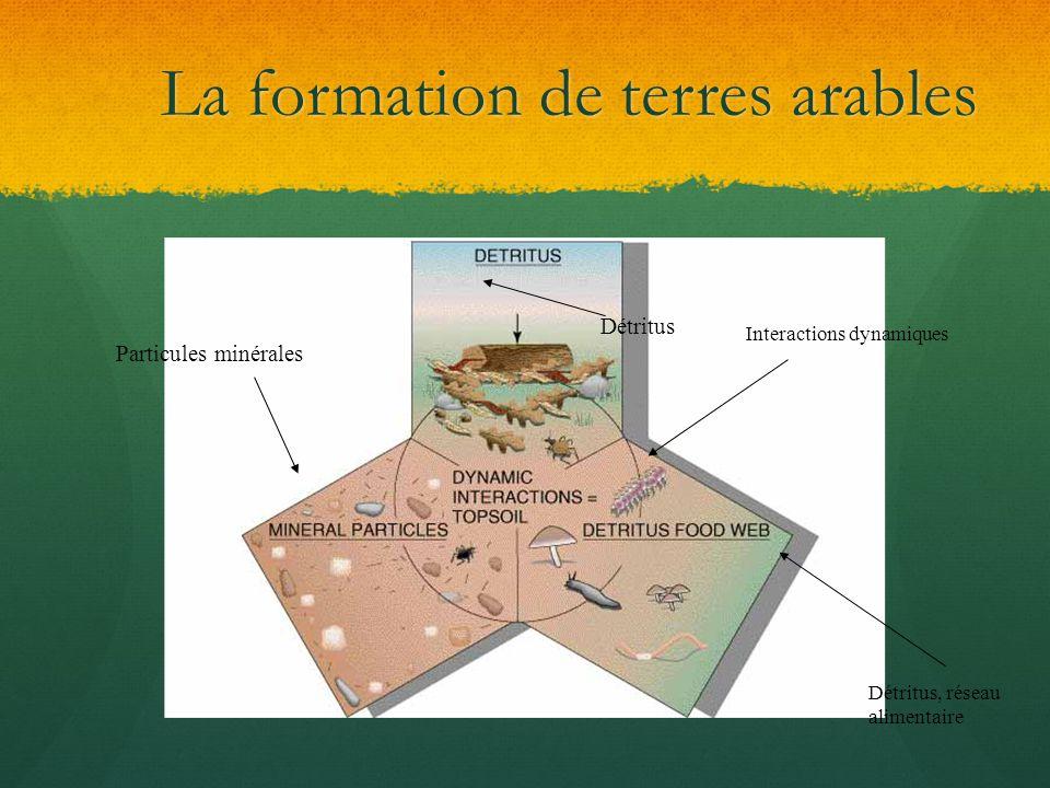La formation de terres arables Détritus Particules minérales Interactions dynamiques Détritus, réseau alimentaire