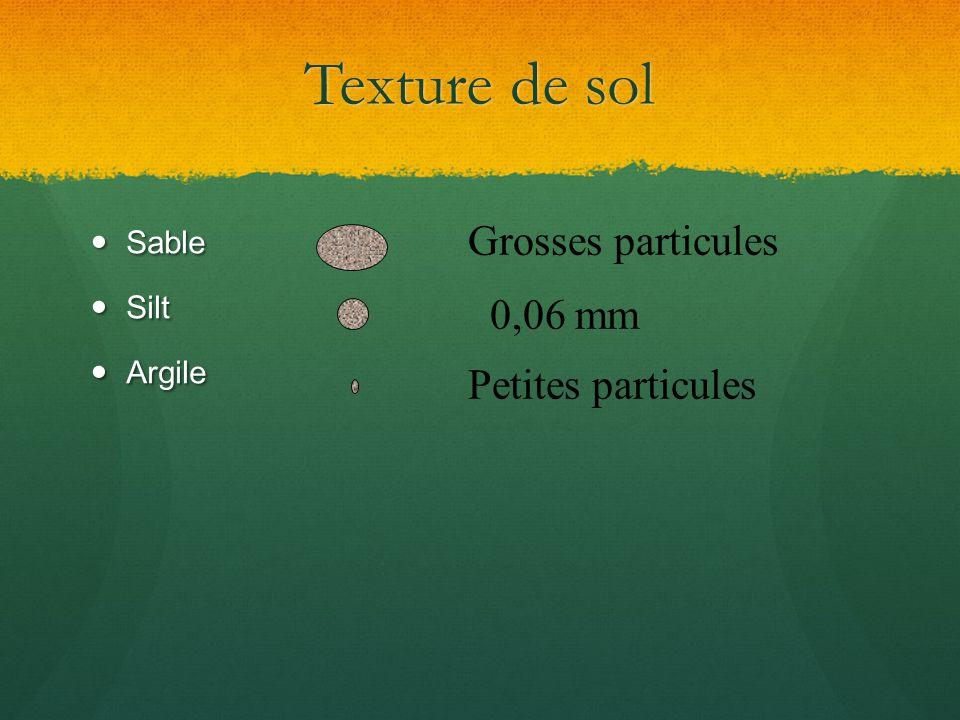 Texture de sol Sable Sable Silt Silt Argile Argile 0,06 mm Petites particules Grosses particules