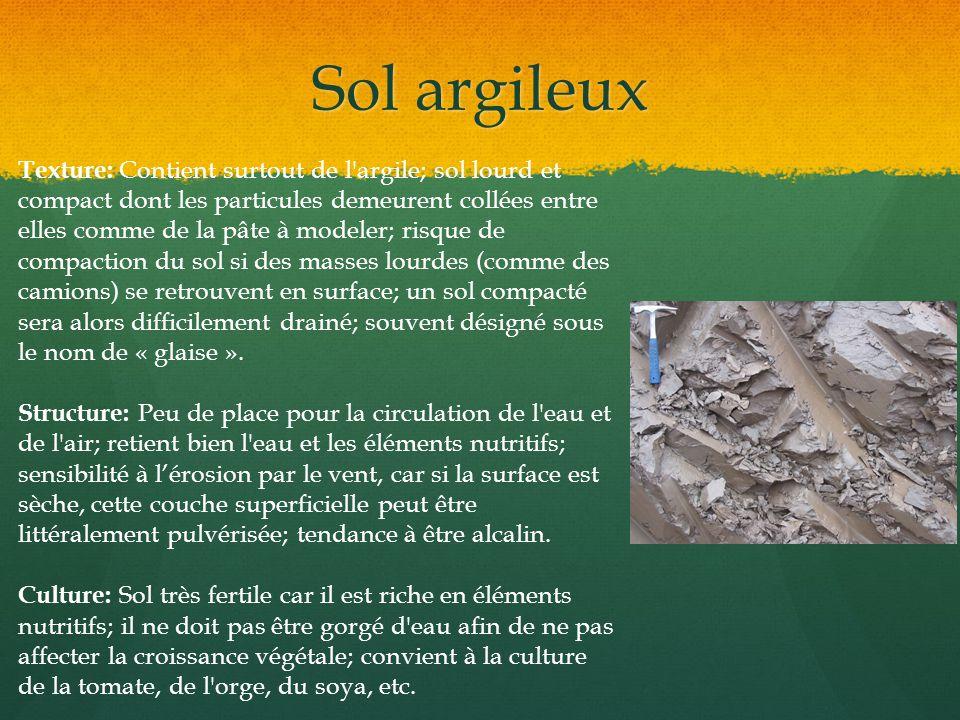 Sol argileux Texture: Contient surtout de l'argile; sol lourd et compact dont les particules demeurent collées entre elles comme de la pâte à modeler;